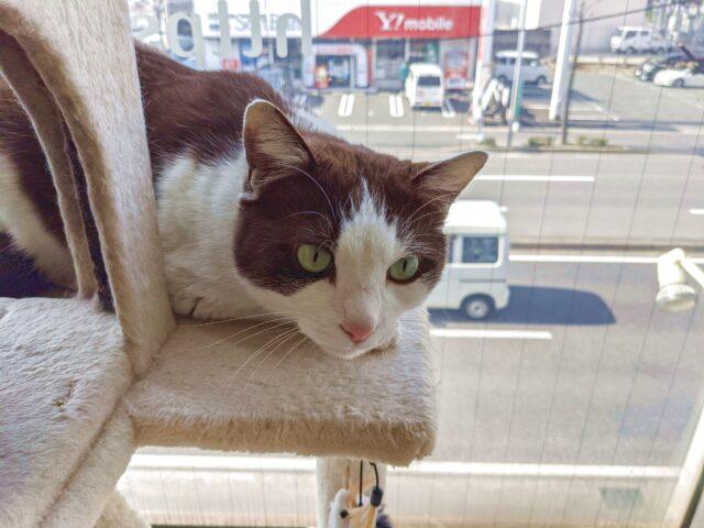 猫カフェで珍しい毛色をした猫ちゃんを発見!