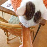 猫カフェでちゅ~るスプーンを借りた!
