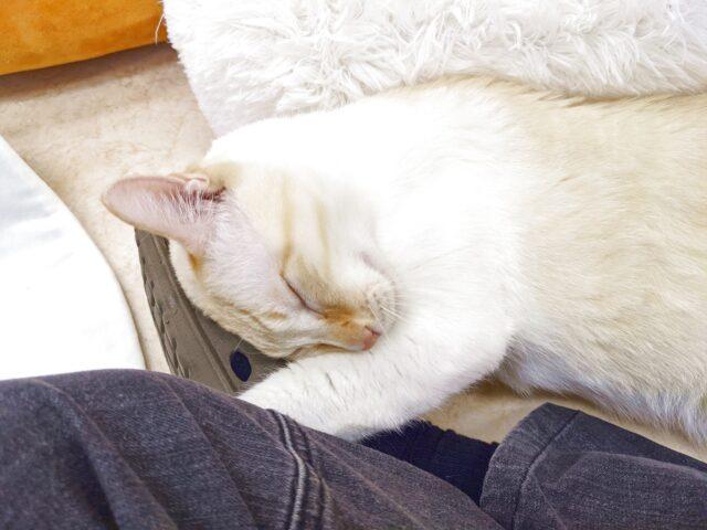 怪奇! 人の足に甘える猫!