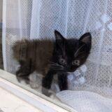 りあんの子猫、名前の分かる子だけ紹介