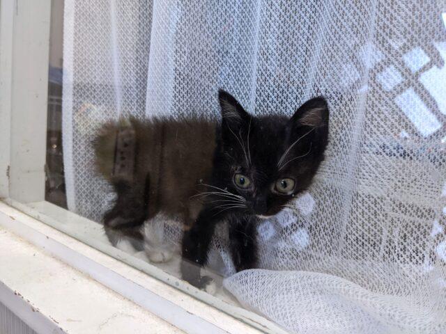 猫カフェでUMAを発見!