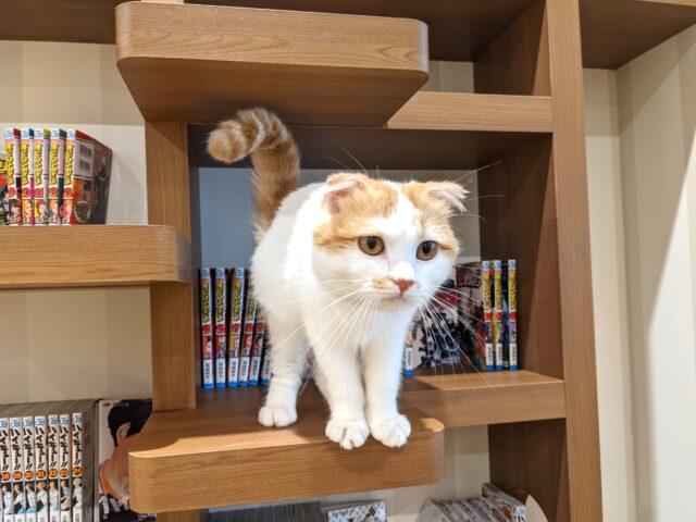 小倉南区に新しくできた猫カフェ 空陸家に行ってきた!